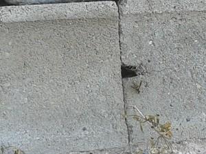 Wasps3